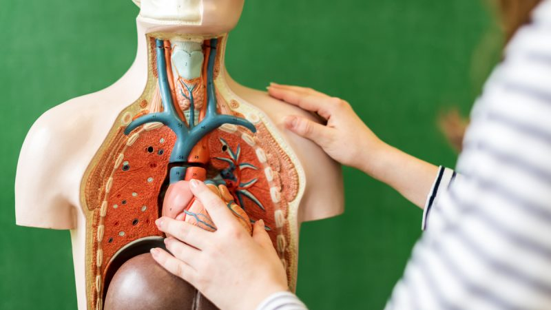 Biologia: temas mais cobrados nos vestibulares